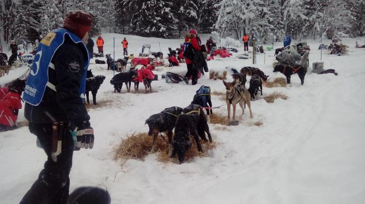 Chiens de traîneau-Kiruna-Randonnée matinale en traîneau à chiens, près de Kiruna-5