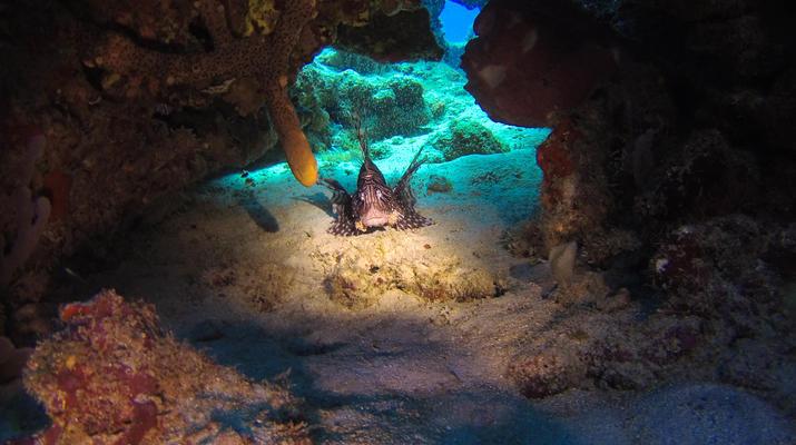 Plongée sous-marine-Saint-François-Bi-Plongées Exploration à Saint-François, Guadeloupe-2