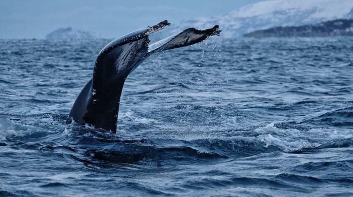 Wildlife Experiences-Tromsø-Whale Watching Safari & Fjord Cruise from Tromso-5