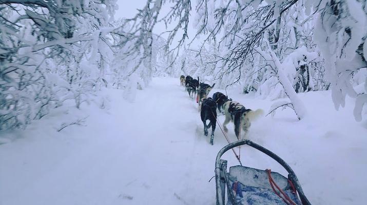 Chiens de traîneau-Kiruna-Randonnée matinale en traîneau à chiens, près de Kiruna-2