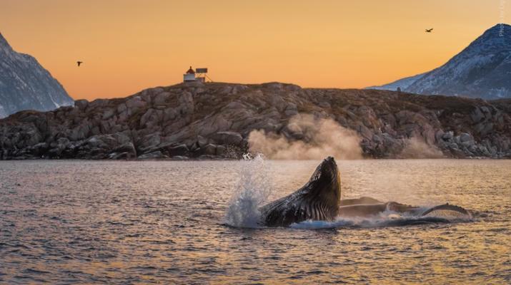 Wildlife Experiences-Tromsø-Whale Watching Safari & Fjord Cruise from Tromso-3