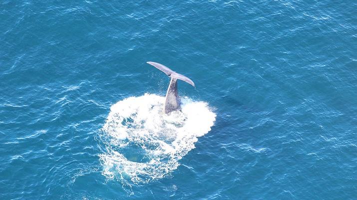 Scenic Flights-Kaikoura-Whale watching flight from Kaikoura-5