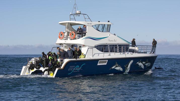 Wildlife Experiences-Kaikoura-Swimming with Dolphins in Kaikoura-3