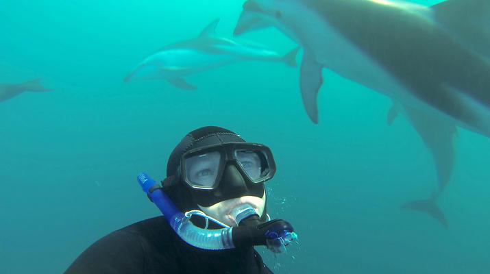 Wildlife Experiences-Kaikoura-Swimming with Dolphins in Kaikoura-1