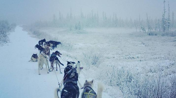 Chiens de traîneau-Kiruna-Randonnée matinale en traîneau à chiens, près de Kiruna-6