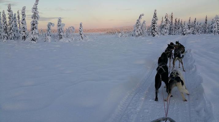 Chiens de traîneau-Kiruna-Randonnée matinale en traîneau à chiens, près de Kiruna-1