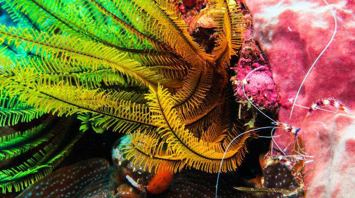 Plongée sous-marine-Saint-François-Stage de Plongée FFESSM Niveau 1 à Saint François-6