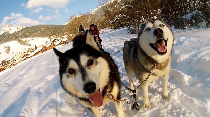 Trineo de perros-Avoriaz, Portes du Soleil-Clase de prueba de trineo con perros en Avoriaz, Portes du Soleil-1
