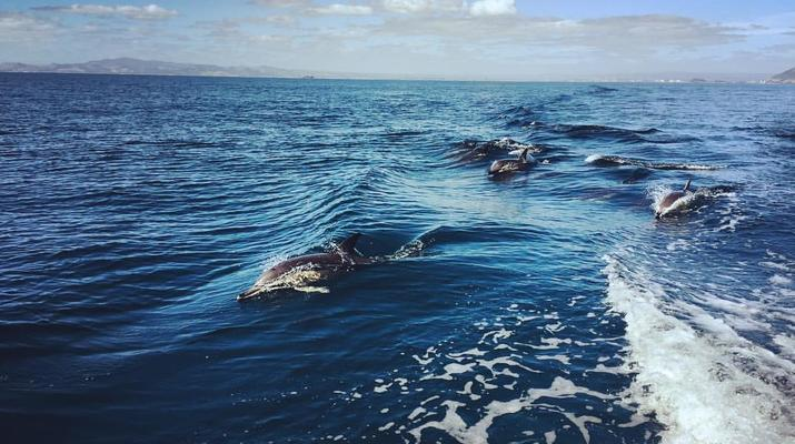 Wildlife Experiences-Tauranga-Swimming with dolphins in the Bay of Plenty-1