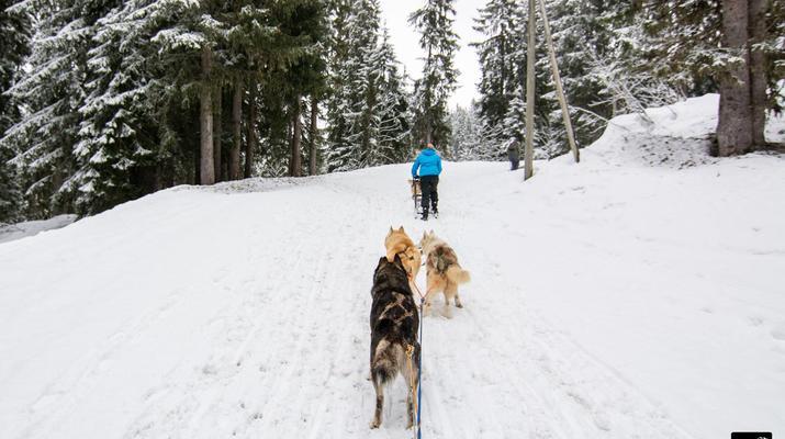 Trineo de perros-Avoriaz, Portes du Soleil-Clase de prueba de trineo con perros en Avoriaz, Portes du Soleil-4