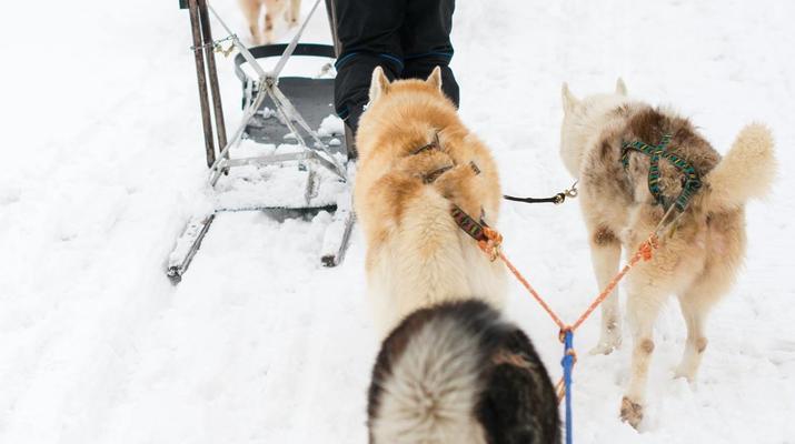 Trineo de perros-Avoriaz, Portes du Soleil-Clase de prueba de trineo con perros en Avoriaz, Portes du Soleil-8