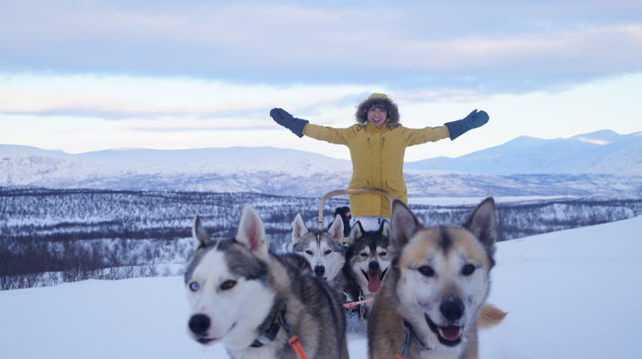Dog sledding-Abisko-Drive Your Own Dogsled in the Arctic Circle-2