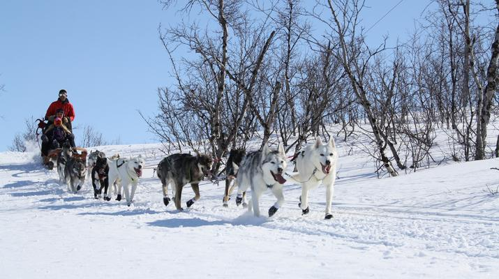 Hundeschlittenfahren-Abisko-Abenteuer Hundeschlittenfahrt am Polarkreis-1