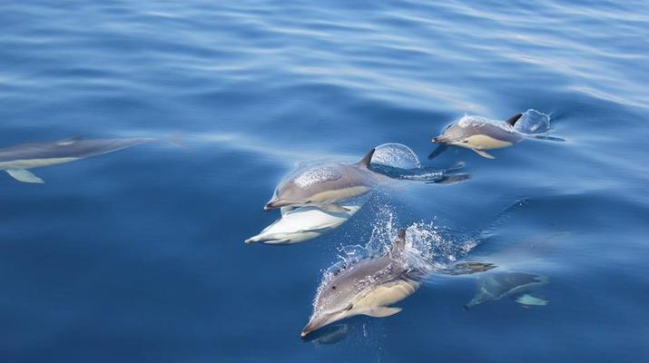 Wildlife Experiences-Tauranga-Swimming with dolphins in the Bay of Plenty-3