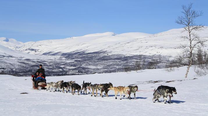 Hundeschlittenfahren-Abisko-Abenteuer Hundeschlittenfahrt am Polarkreis-5