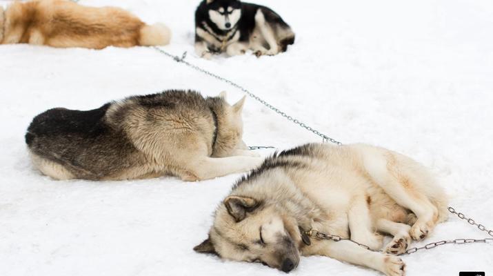 Trineo de perros-Avoriaz, Portes du Soleil-Clase de prueba de trineo con perros en Avoriaz, Portes du Soleil-6