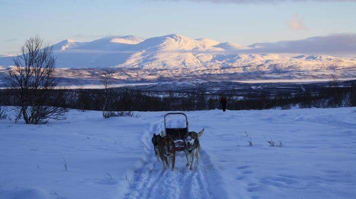 Hundeschlittenfahren-Abisko-Abenteuer Hundeschlittenfahrt am Polarkreis-4