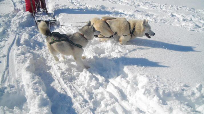 Trineo de perros-Avoriaz, Portes du Soleil-Clase de prueba de trineo con perros en Avoriaz, Portes du Soleil-2