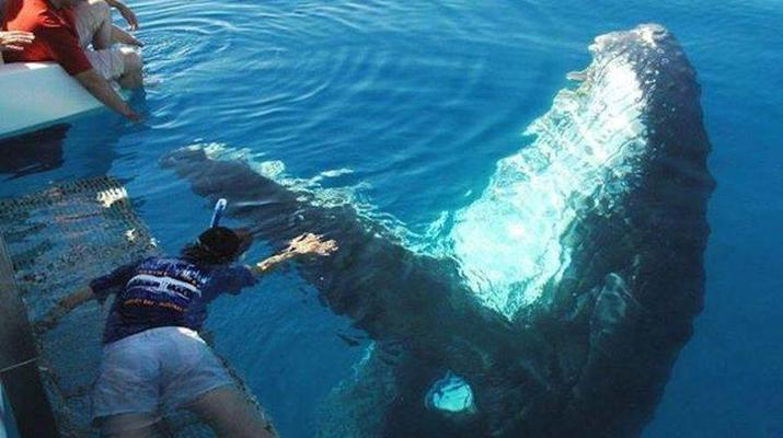 Wildlife Experiences-Tauranga-Swimming with dolphins in the Bay of Plenty-5