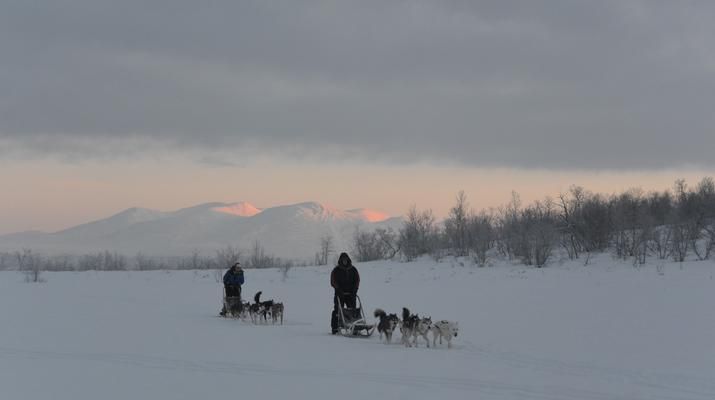 Dog sledding-Abisko-Drive Your Own Dogsled in the Arctic Circle-4