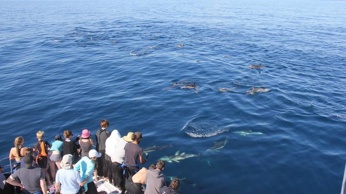 Wildlife Experiences-Tauranga-Swimming with dolphins in the Bay of Plenty-4