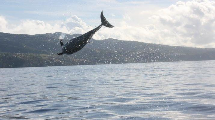 Snorkeling-Les Trois-Îlets-Snorkeling et Observation des Dauphins aux Trois-Îlets, Martinique-6