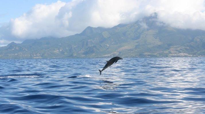 Snorkeling-Les Trois-Îlets-Snorkeling et Observation des Dauphins aux Trois-Îlets, Martinique-5