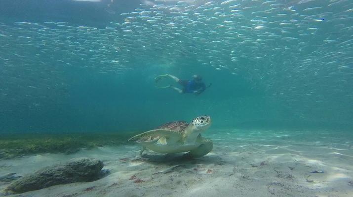 Snorkeling-Les Trois-Îlets-Snorkeling et Observation des Dauphins aux Trois-Îlets, Martinique-2