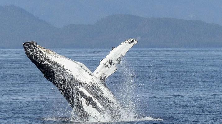 Experiences Wildlife-Chutes de Tamarin - Gorges de Rivière Noire-Observation des Baleines et Snorkeling avec les Dauphins à Maurice-2