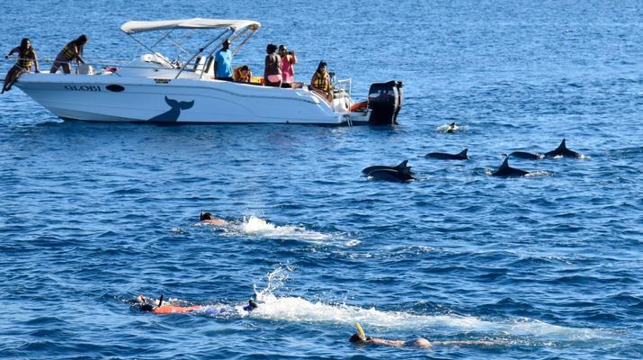 Snorkeling-Chutes de Tamarin - Gorges de Rivière Noire-Nager avec les Dauphins sur la Côte Ouest de Maurice-1