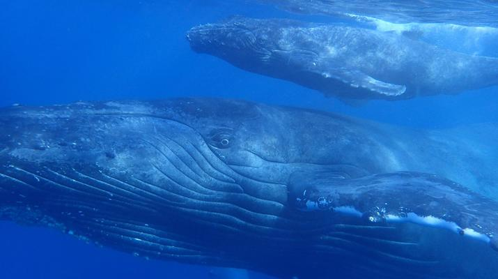 Snorkeling-Lagon de Saint-Gilles-Nager avec les dauphins et les baleines à Saint-Gilles, La Réunion-6