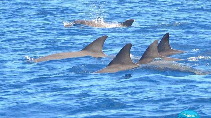 Snorkeling-Chutes de Tamarin - Gorges de Rivière Noire-Nager avec les Dauphins sur la Côte Ouest de Maurice-2