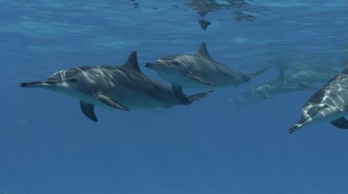 Snorkeling-Lagon de Saint-Gilles-Nager avec les dauphins et les baleines à Saint-Gilles, La Réunion-2