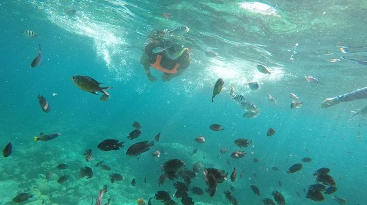 Canyoning-Cebu-Kawasan Falls & Moalboal Island Private Tour Package-3