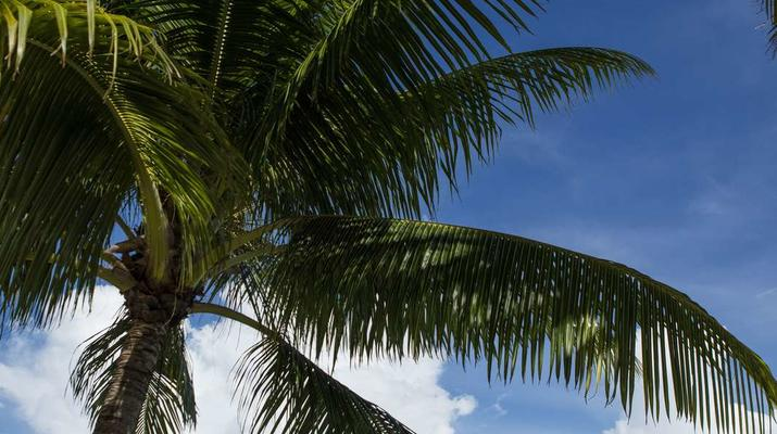 Vols Panoramiques-Bora Bora-Vol panoramique en avion au dessus de Raiatea et Taha'a-6
