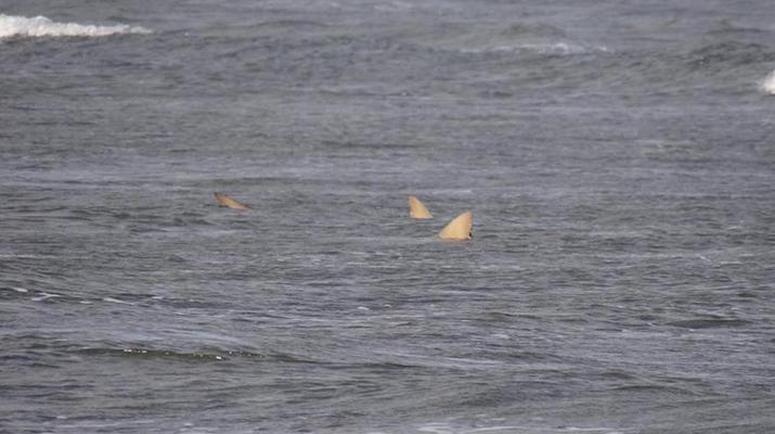Wildlife Experiences-Sal-Shark Watching Experience on Sal Island-4