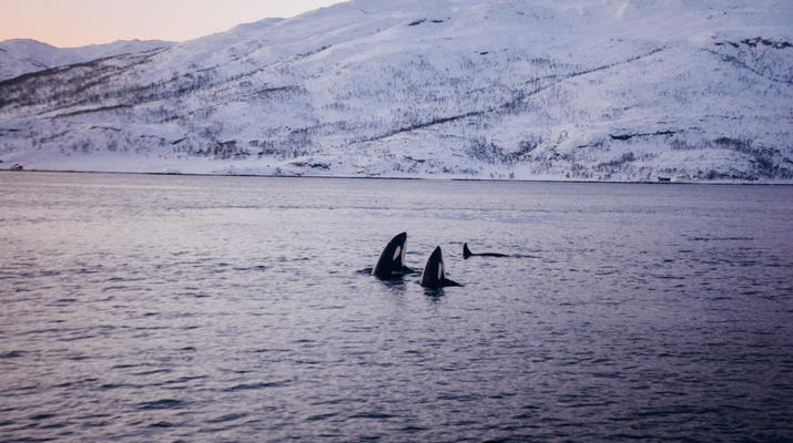 Sailing-Tromsø-Arctic sailing safari in Tromsø-4