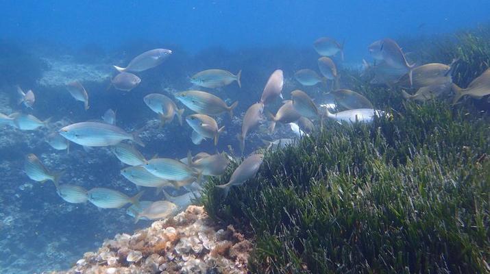 Snorkeling-Palma, Majorque-Plongée en apnée dans la réserve marine près de Palma de Majorque-5