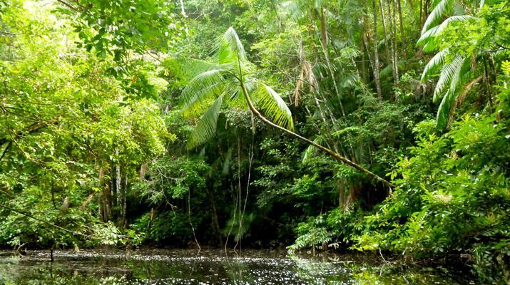 Canoë-kayak-Guyane-Excursion Canoë-Kayak sur les rivières de Guyane-4