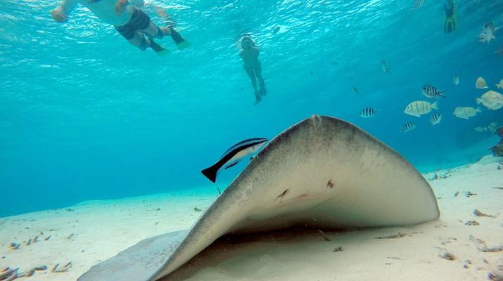 Snorkeling-Bora Bora-Excursion snorkeling dans le lagon à Bora Bora-1