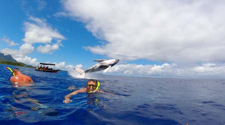 Experiences Wildlife-Bora Bora-Excursion nage et rencontre avec les baleines à Bora Bora-1