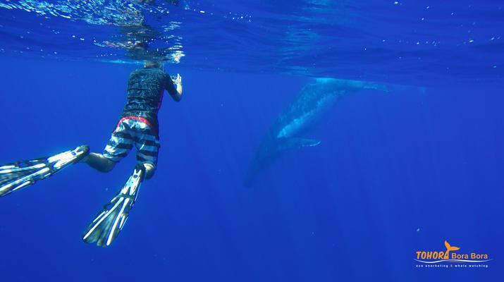 Experiences Wildlife-Bora Bora-Excursion nage et rencontre avec les baleines à Bora Bora-3