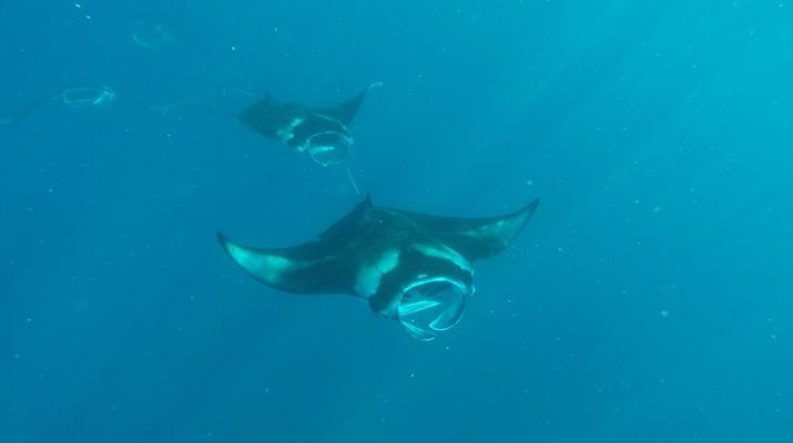 Snorkeling-Bora Bora-Excursion snorkeling dans le lagon à Bora Bora-2