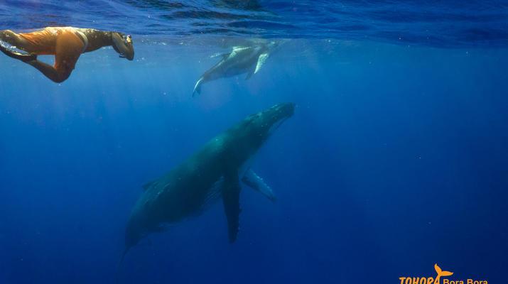 Experiences Wildlife-Bora Bora-Excursion nage et rencontre avec les baleines à Bora Bora-4