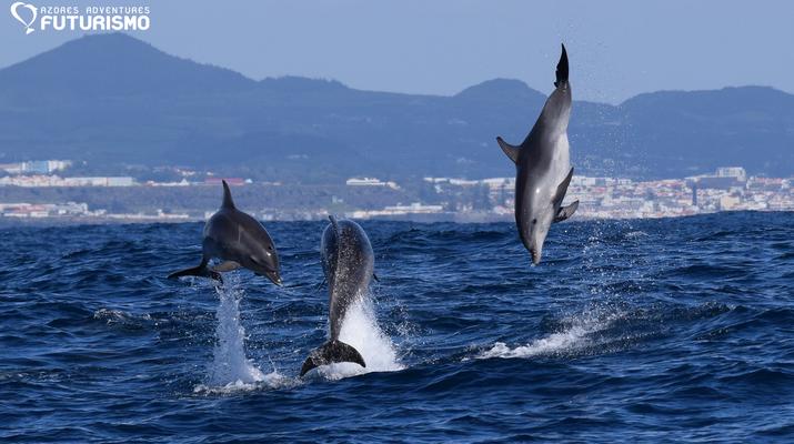 Wildlife Experiences-São Miguel-Whale watching tour in Ponta Delgada in São Miguel-1