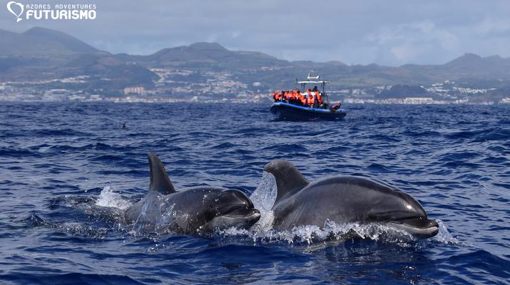 Wildlife Experiences-São Miguel-Whale watching tour in Ponta Delgada in São Miguel-5