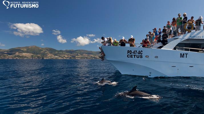 Wildlife Experiences-São Miguel-Whale watching tour in Ponta Delgada in São Miguel-4