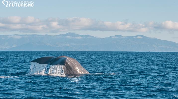 Wildlife Experiences-São Miguel-Whale watching tour in Ponta Delgada in São Miguel-2