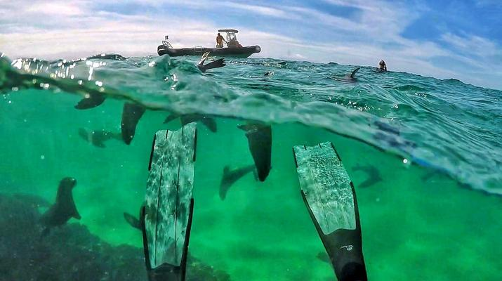 Snorkeling-Plettenberg Bay-Swimming with seals in Robberg Nature Reserve-4
