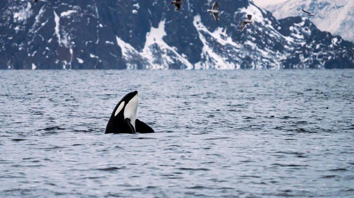 Wildlife Experiences-Tromsø-Silent whale watching excursion from Tromsø-5